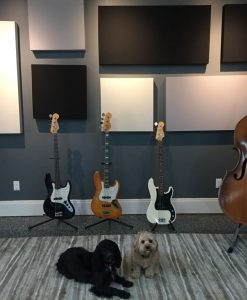 Eric Johnson Panels with Bass and Dogs GIK Acoustics 242 Acoustic Panels